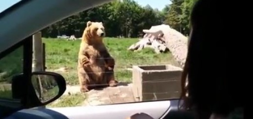 놀라운 곰