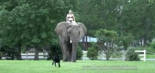 강아지와 코끼리