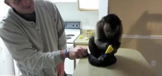 레몬 싫어하는 원숭이