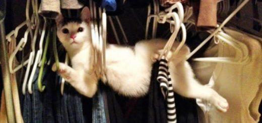 스스로 덫에 갇혀버린 귀여운 동물들