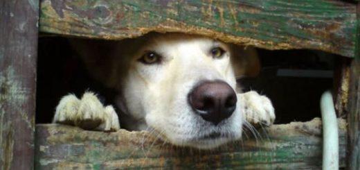 필사적으로 인사하는 귀여운 강아지들